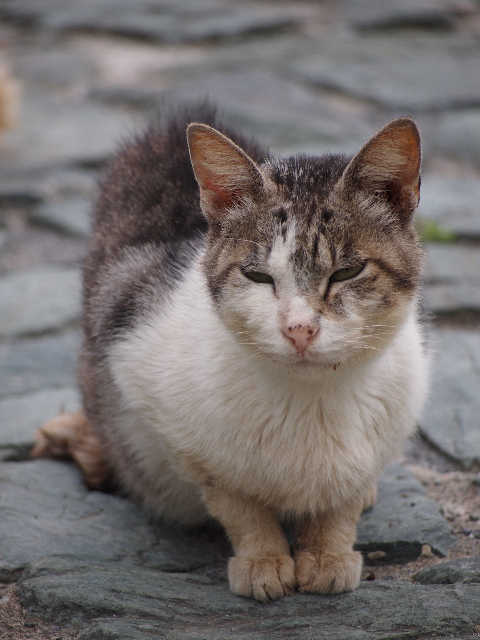 猫の小太郎のツィッター_d0339889_12084286.jpg