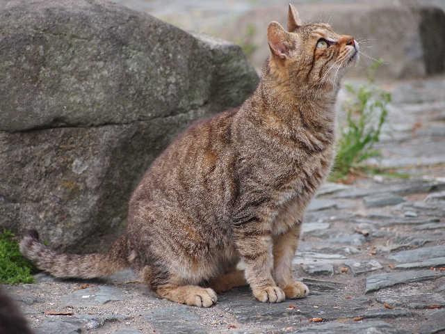 猫の小太郎のツィッター_d0339889_12084297.jpg