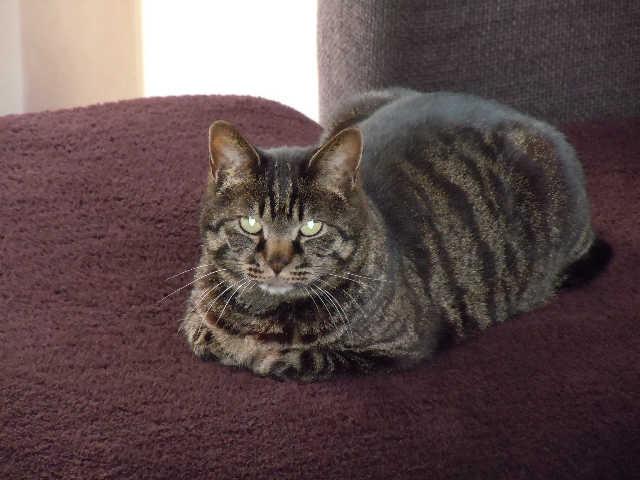猫の小太郎のツィッター_d0339889_12084308.jpg