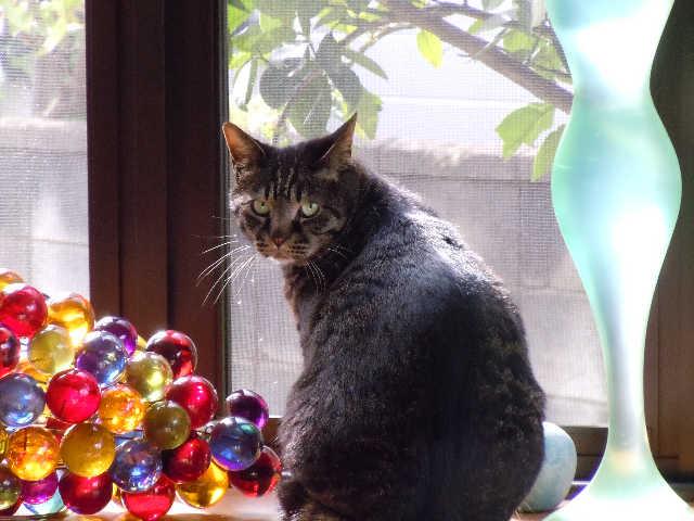 猫の小太郎のツィッター_d0339889_12084322.jpg