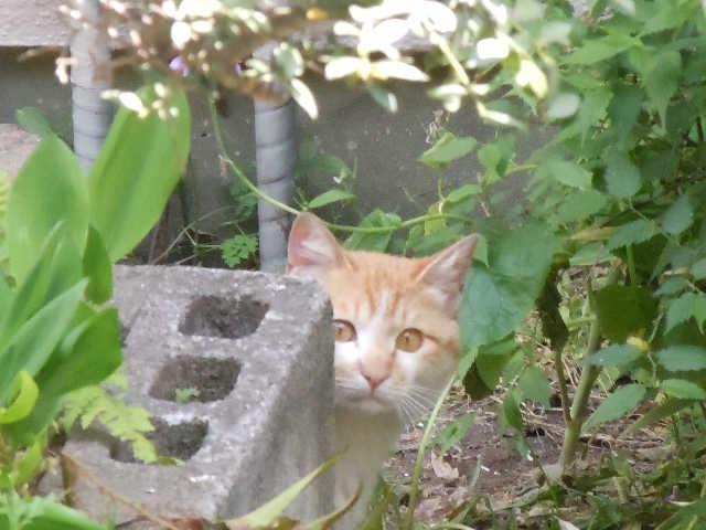 猫の小太郎のツィッター_d0339889_12084372.jpg