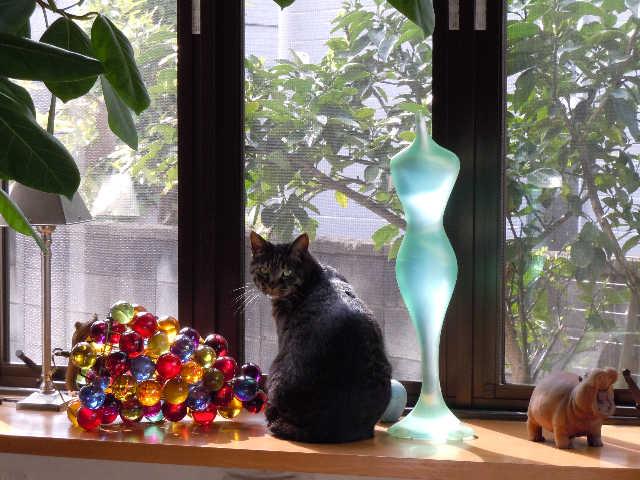猫の小太郎のツィッター_d0339889_12084390.jpg