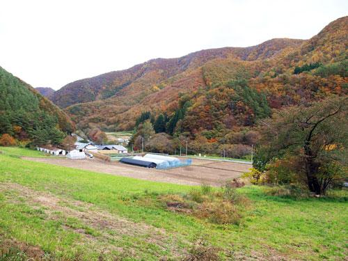 紅葉の楽しみ方~落葉のはじまりと熱燗編~_f0236291_10485014.jpg