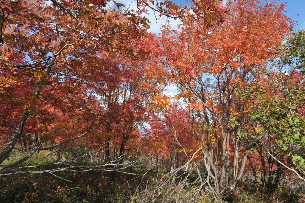 樽前山、10月15日_f0138096_2141095.jpg