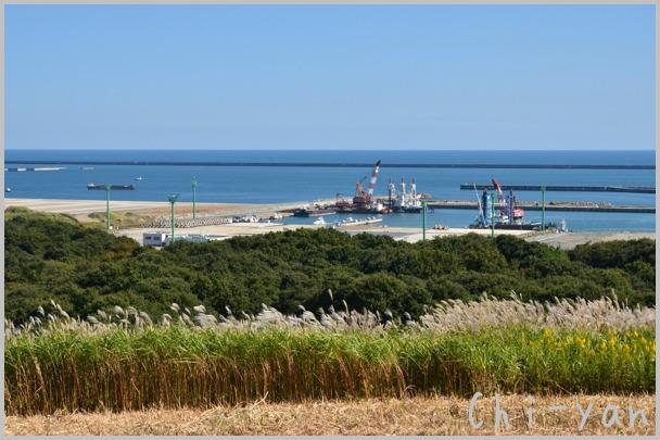 コキアが見頃の 「国営ひたち海浜公園」 と 「大洗磯前神社」_e0219011_10551162.jpg