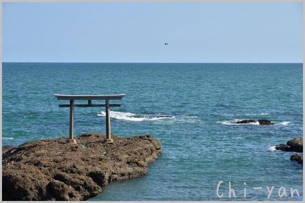 コキアが見頃の 「国営ひたち海浜公園」 と 「大洗磯前神社」_e0219011_10561057.jpg