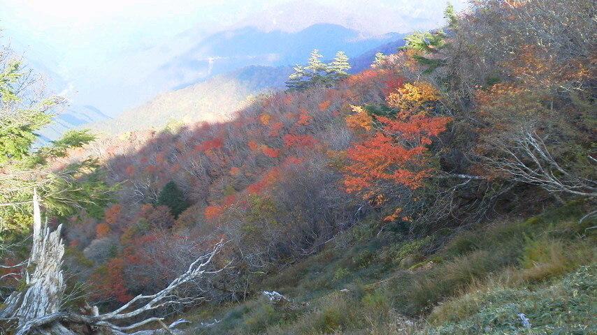 10月16日台風の影響も少なく、今年の紅葉の仕上がりはまずまずの様子。_c0089831_23281238.jpg