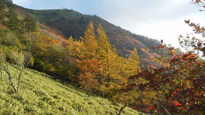 10月16日台風の影響も少なく、今年の紅葉の仕上がりはまずまずの様子。_c0089831_23281248.jpg