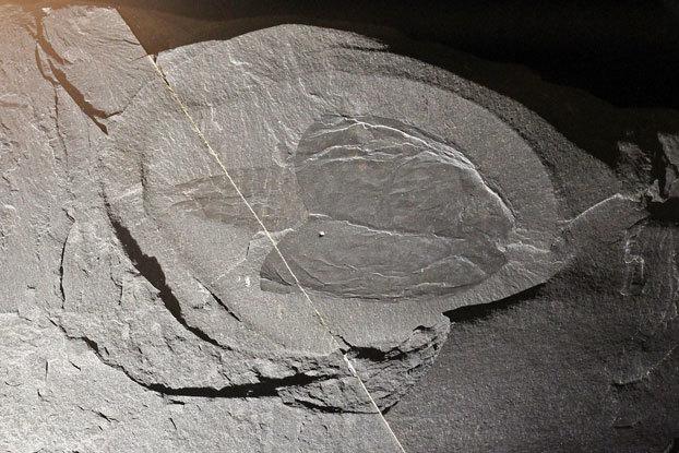 バージェス頁岩の画像 p1_37