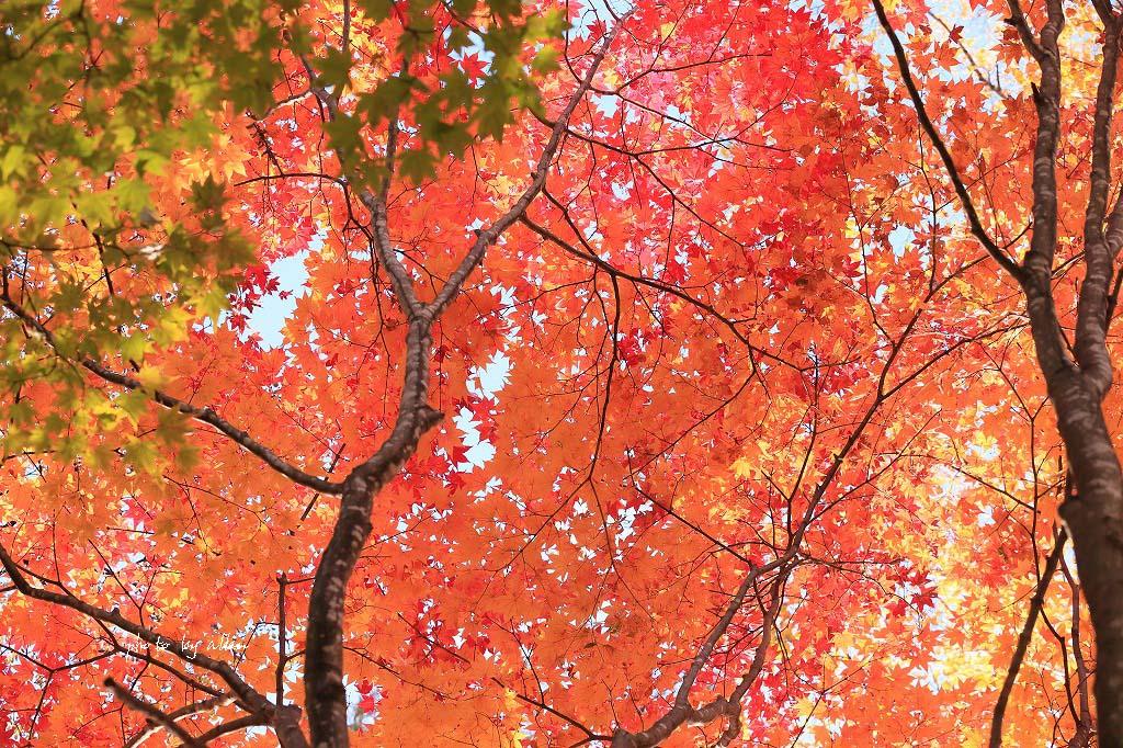 秋のオンネトーより~_a0039860_1954135.jpg