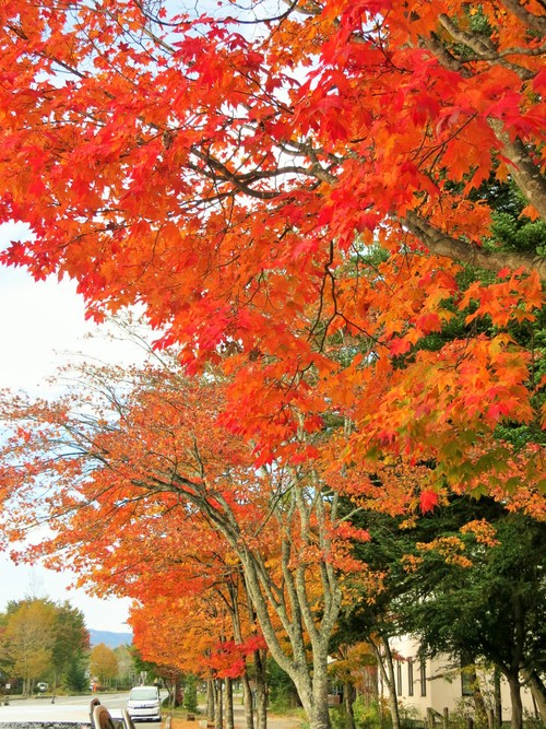 軽井沢の紅葉速報・2015_f0236260_20161953.jpg