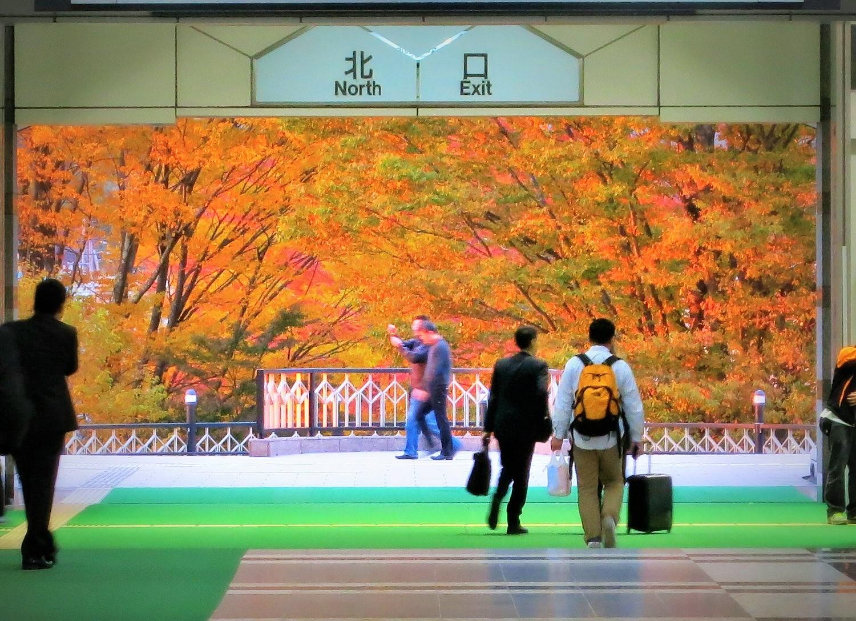 軽井沢の紅葉速報・2015_f0236260_210265.jpg