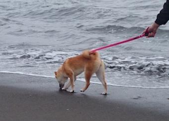 海〜!_b0011075_18353222.jpg