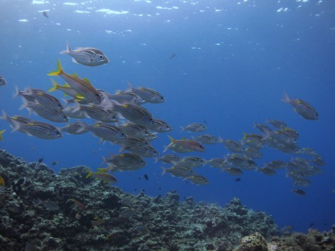 10月17日瀬底島ダイビング!!_c0070933_22220661.jpg