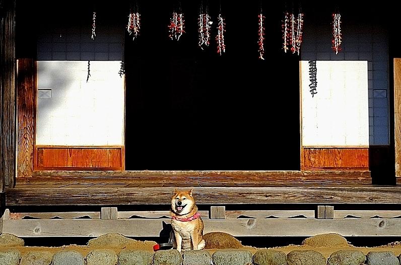 ニッポンの犬 Ⅰ_b0314043_11330915.jpg