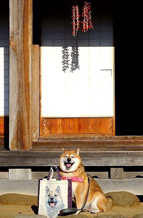 ニッポンの犬 Ⅰ_b0314043_11335606.jpg
