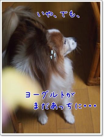 d0013149_00120212.jpg