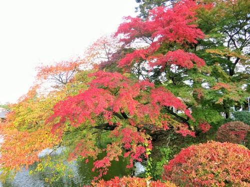 軽井沢の紅葉速報・2015_f0236260_0275489.jpg