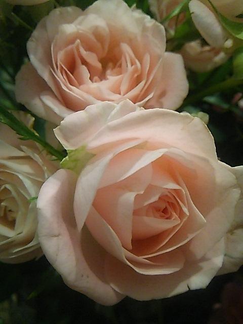 ミニマリアの豆乳のハチミツ寒天❤とパリのお土産 ANGELINA Paris &Maxims de ParisのSweetS。.:*:・\'°☆_a0053662_2161123.jpg