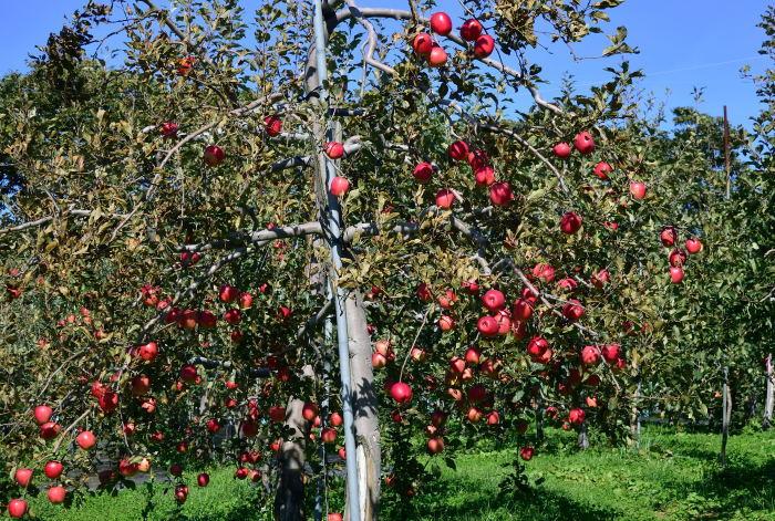 収穫の秋_e0213363_00372941.jpg