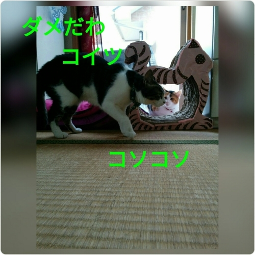 a0289878_16561992.jpg