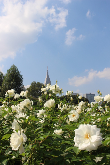 新宿御苑 バラ花壇をぶらり_a0180279_19254811.jpg