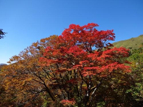 快晴の瓶ヶ森林道_e0201281_2012582.jpg