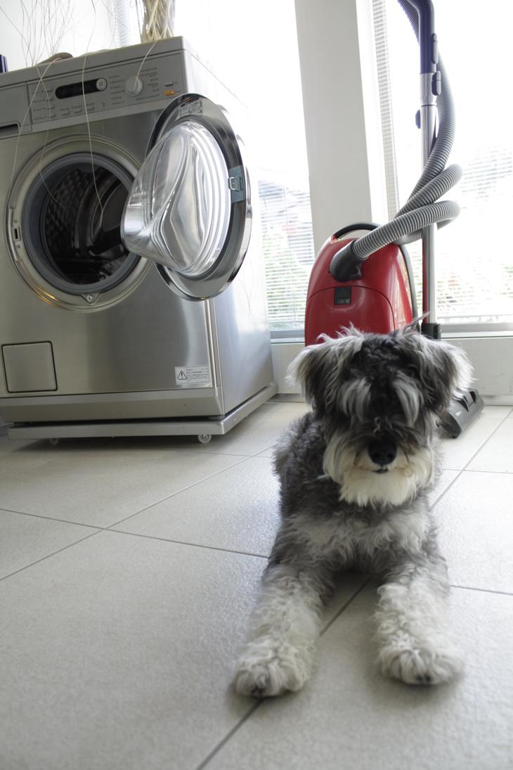 Miele洗濯機のドラムはハニカムドラムです。_a0155290_1652168.jpg