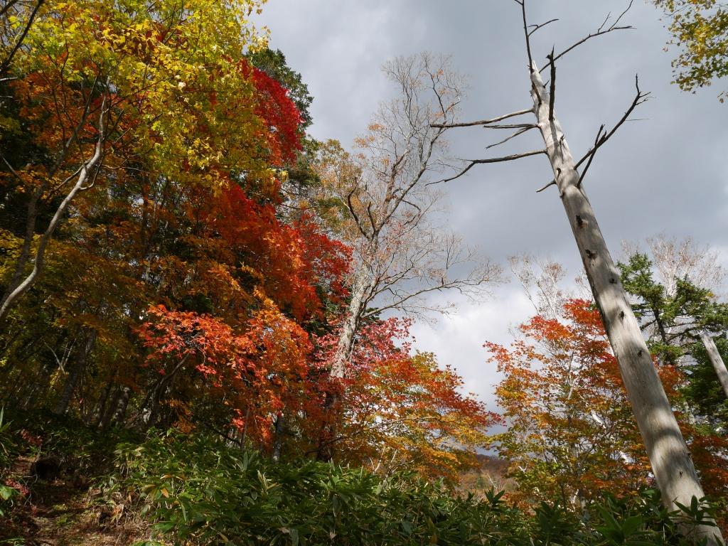 イチャンコッペ山の紅葉、10月15日_f0138096_17462232.jpg