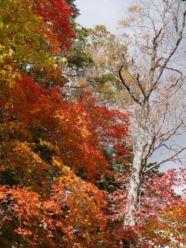 イチャンコッペ山の紅葉、10月15日_f0138096_17463123.jpg