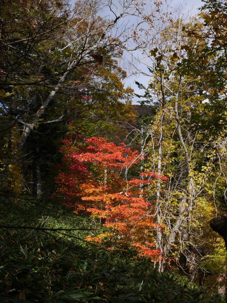 イチャンコッペ山の紅葉、10月15日_f0138096_17464082.jpg