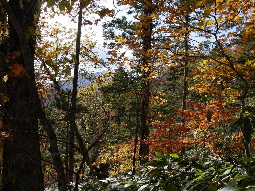 イチャンコッペ山の紅葉、10月15日_f0138096_17472588.jpg