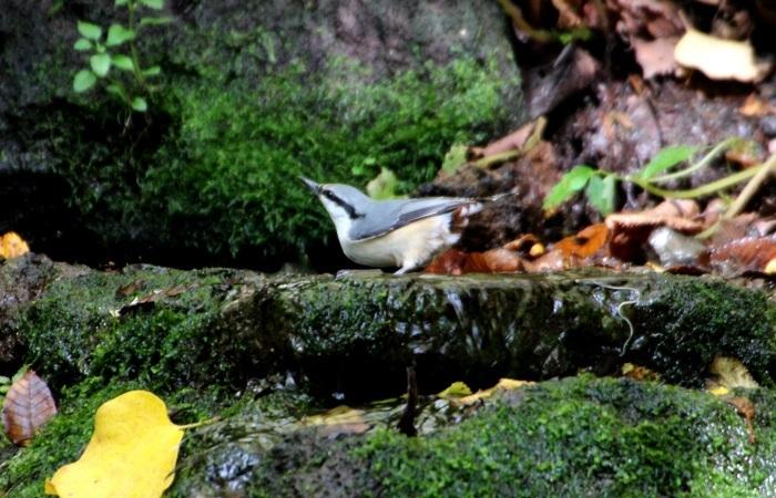 2015.10.18 冬鳥はまだでした・山中湖周辺・ゴジュウカラ他(The winter bird had not yet come.)_c0269342_20030231.jpeg