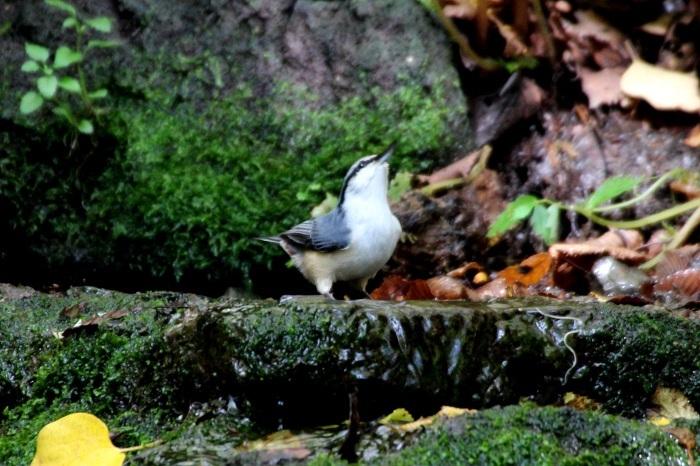 2015.10.18 冬鳥はまだでした・山中湖周辺・ゴジュウカラ他(The winter bird had not yet come.)_c0269342_20035749.jpeg