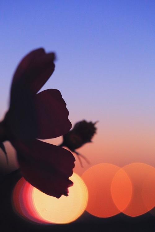 私は夜の秋桜_e0241944_00392583.jpg