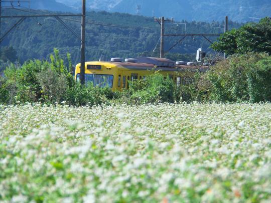 蕎麦畑と電車_f0266284_23500407.jpg