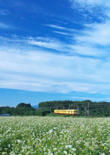 蕎麦畑と電車_f0266284_23503398.jpg