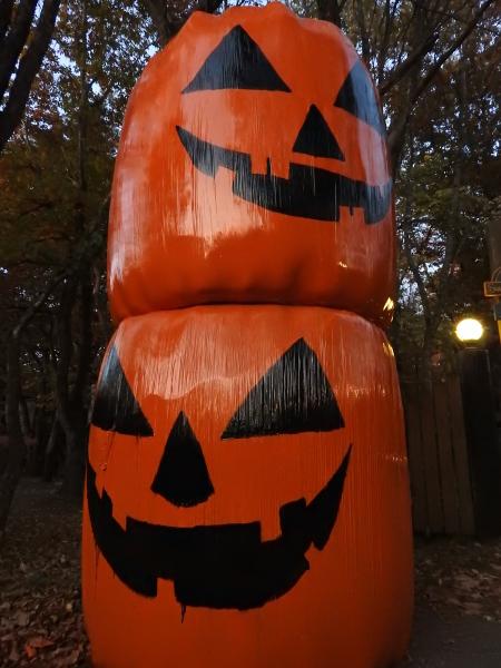 お化けかぼちゃ現る_b0174425_20141854.jpg