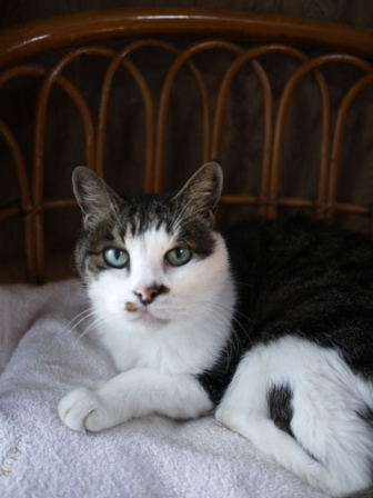 猫のお留守番 サンくんツキくん編。_a0143140_2242332.jpg