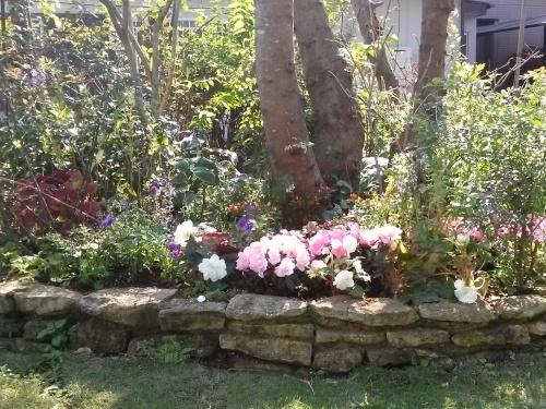 秋の庭_f0228967_23144689.jpg