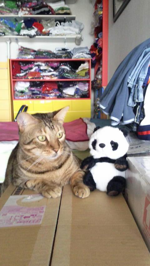 ネコ・天ちゃんと、物まねパンダ_d0339676_11250273.jpg