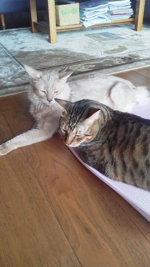 ネコとヨガ・空ちゃんと天ちゃん_d0339676_11260391.jpg