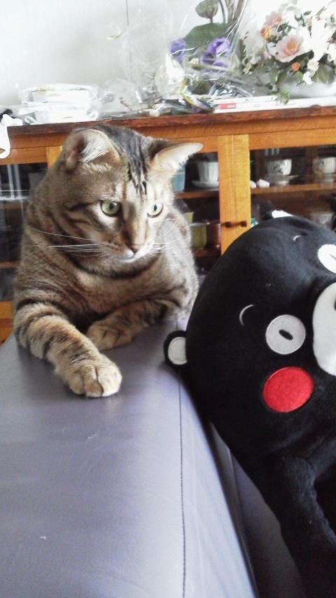ネコ・天ちゃんと、くまもん_d0339676_11262371.jpg