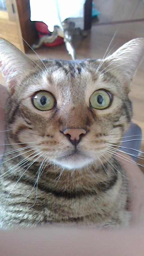 ネコ・天ちゃんの証明写真_d0339676_11270117.jpg