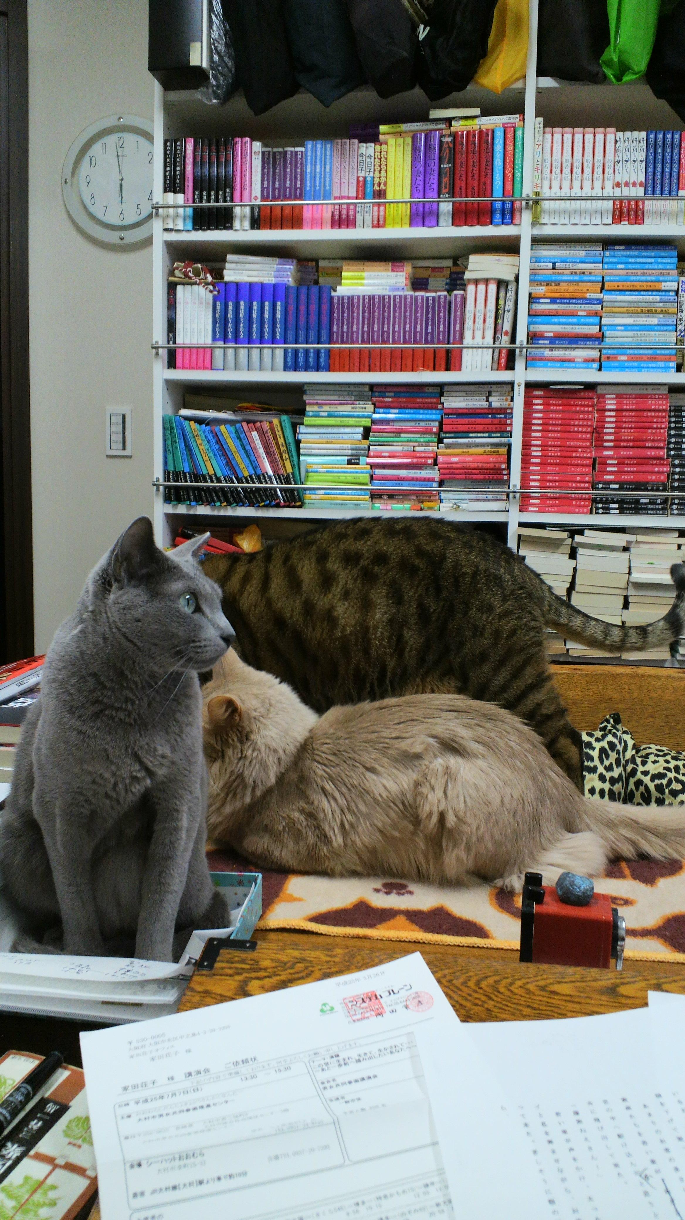 ネコ・空ちゃん、海ちゃん、天ちゃん_d0339676_11275660.jpg