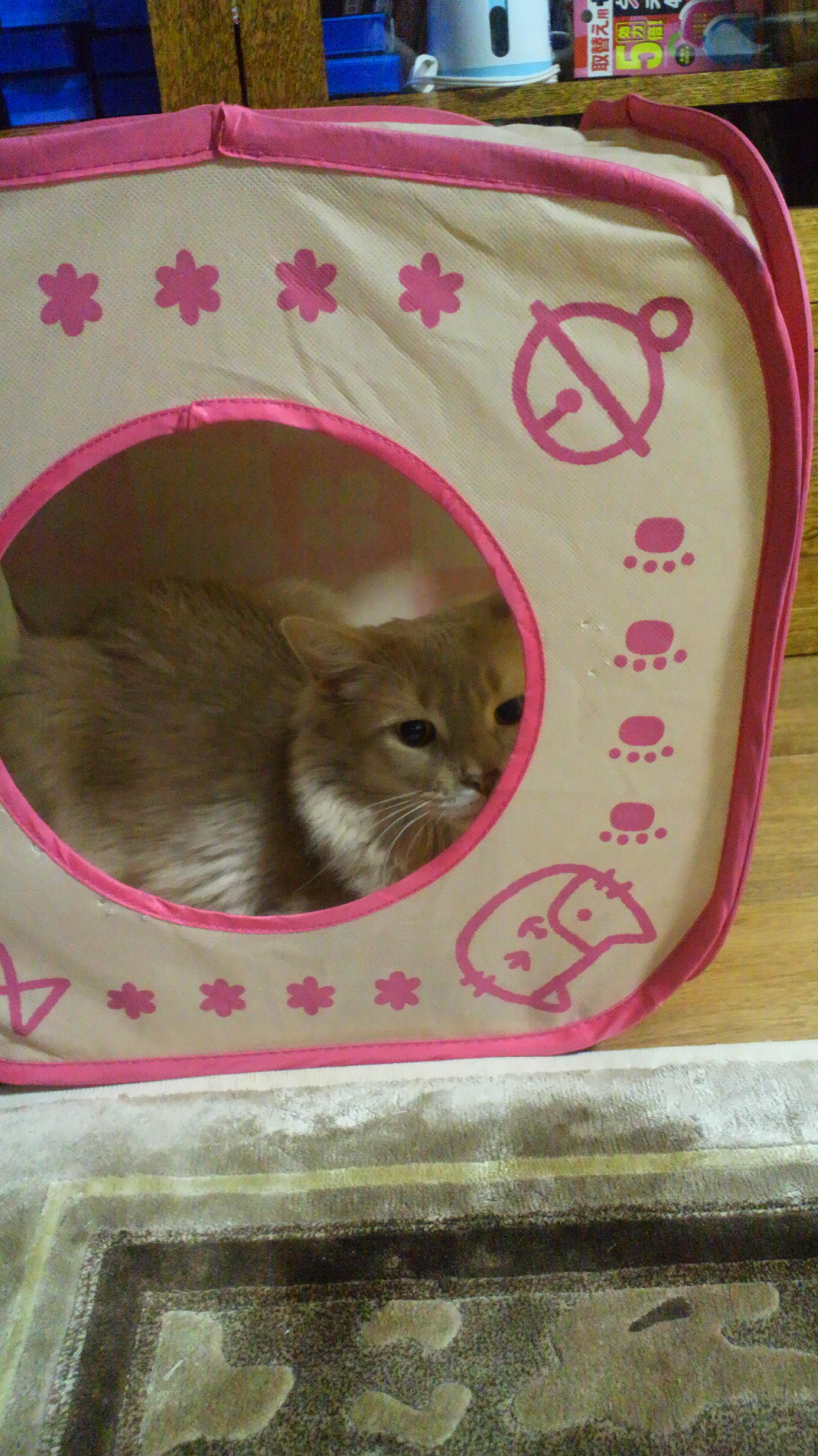ネコ・お誕生日空ちゃん_d0339676_11282728.jpg