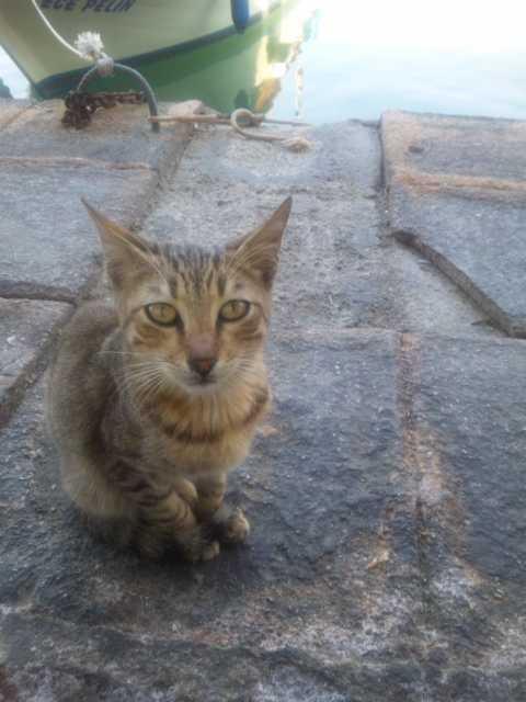 猫_d0339677_11461593.jpg