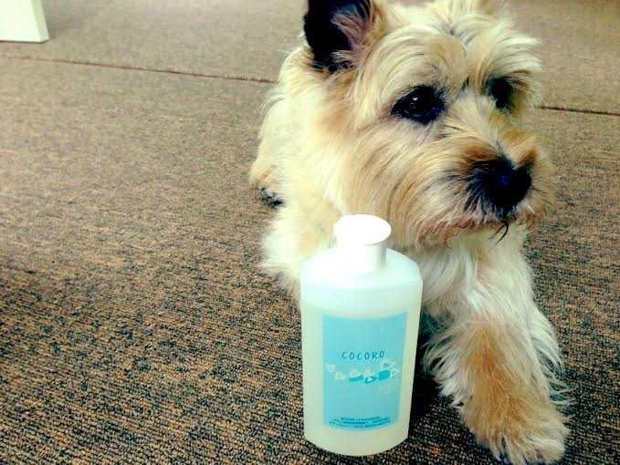 犬のことを一番に考えたスペシャル低刺激の犬シャンプー:クリスタルライフフォードッグ COCORO_d0339885_13002636.jpg