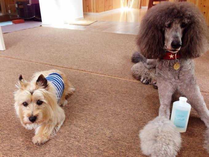 犬のことを一番に考えたスペシャル低刺激の犬シャンプー:クリスタルライフフォードッグ COCORO_d0339885_13002684.jpg