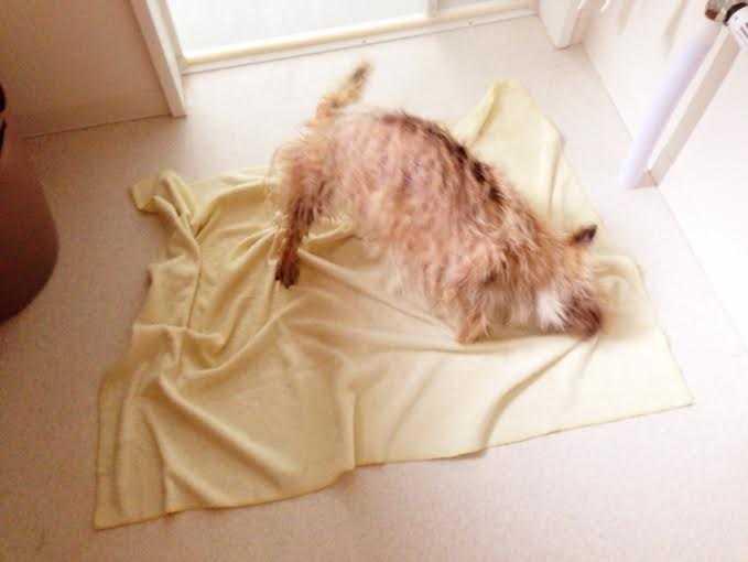 犬のことを一番に考えたスペシャル低刺激の犬シャンプー:クリスタルライフフォードッグ COCORO_d0339885_13002696.jpg